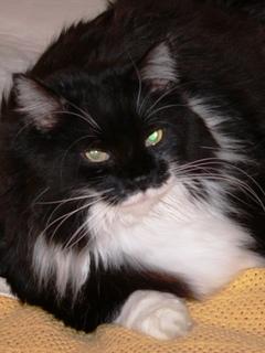 Lidded Cat Litter Target
