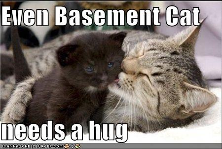 Funny Cat Videos Falling In The Basement