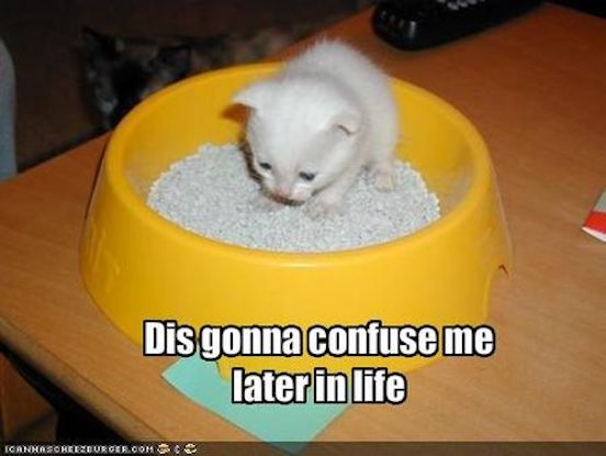 Cat Food Bowl Slower Eatomg