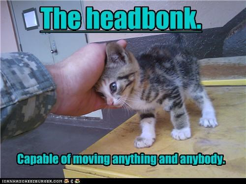 Why Do Cats Like Their Heads Rubbed