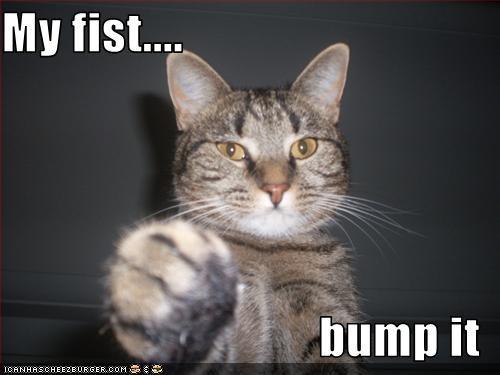 GUYS!!! White Cat fist bump