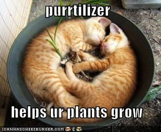 Fighting cats where did we go wrong purrtilizer helps ur plants grow sciox Image collections