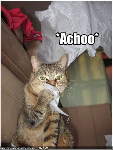 Cats Allergic To Chicken Dry Food