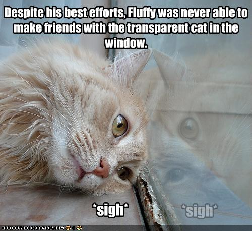 Can Cats Become Immune To Feliway
