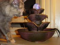 Cats like running water because they like the way it smells. The ...