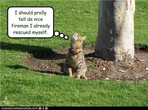 Question Cat Meme