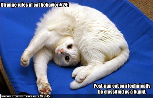 Weird Cat Behavior Video