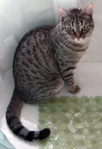 Cat Scratch Training