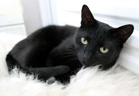 ... Pictures of Cats with excellent tips on photographing black cats