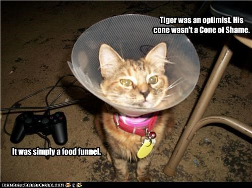 do cats spray after they are spayed