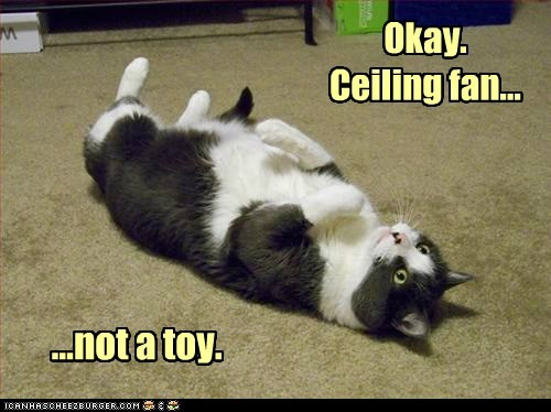 The learning curve way of cats blog ceiling fan not a toy mozeypictures Image collections