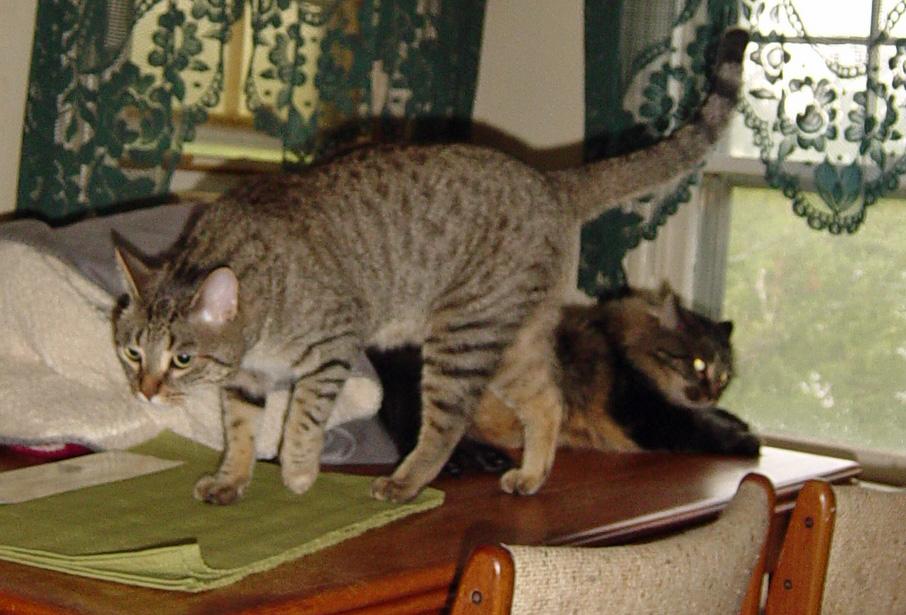 Rj Cat  Rxp Txp