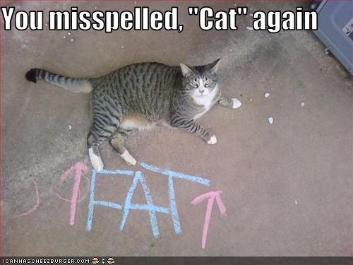 http://www.wayofcats.com/blog/wp-content/uploads/2014/11/misspelledCat.jpeg