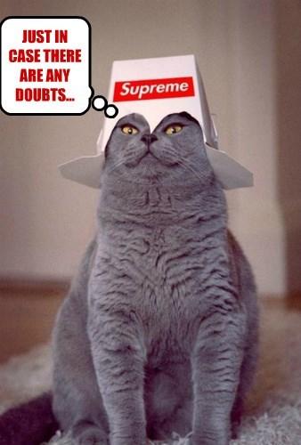 Cat Power Speak For Me