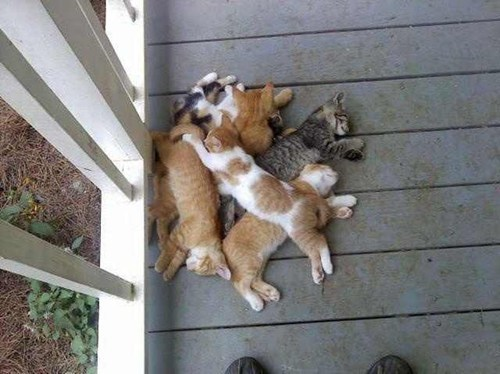 So That's Where I Left My Pile of Cats