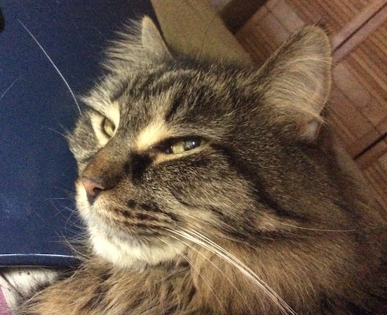 RJ, on my lap, sends me a cat kiss