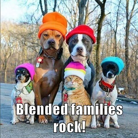 Blended families rock.