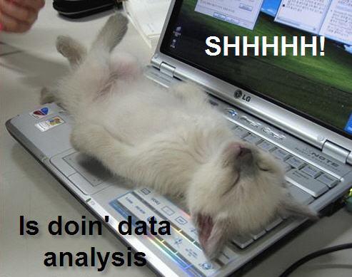 SHHHH! doin' data analysis (kitten on back on top of laptop keyboard)