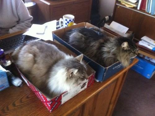 Cat Senses Food Tower Dishwasher