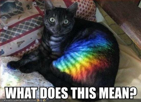 Rainbowcat Way Of Cats Blog