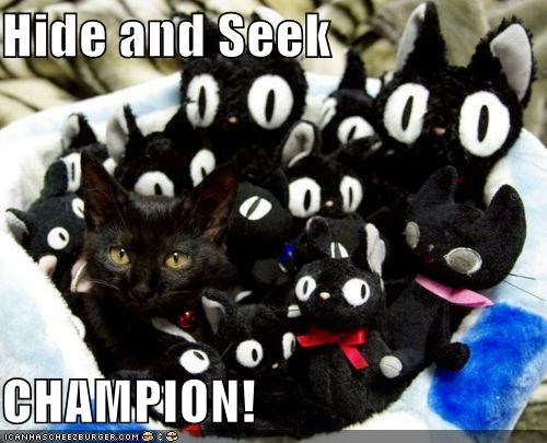 Cat Games: Playing Hide and Seek – the Way of Cats
