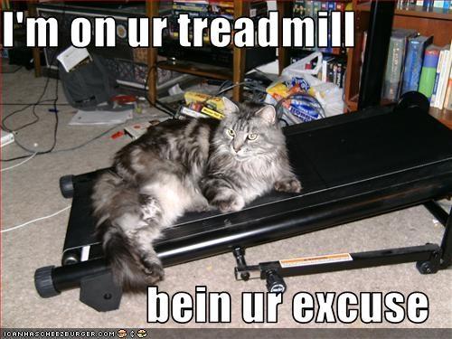 Luxury Cat Funny