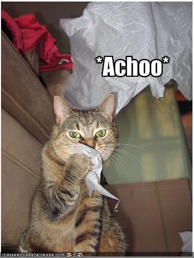 Best Allergy Cat Food