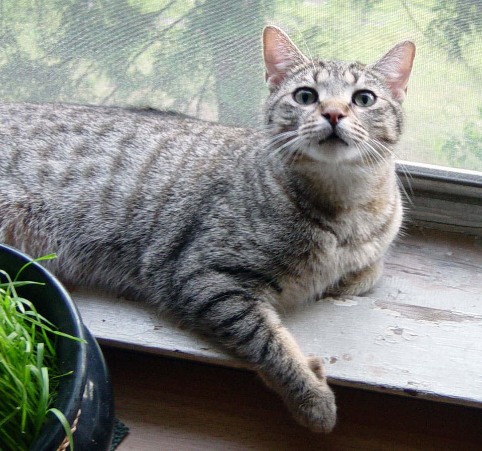 What is it like having an Alpha cat?