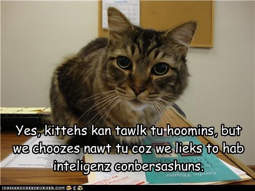Do cats understand what we say to them?