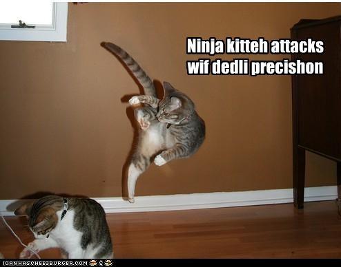 Funny Cat Attacks Dog