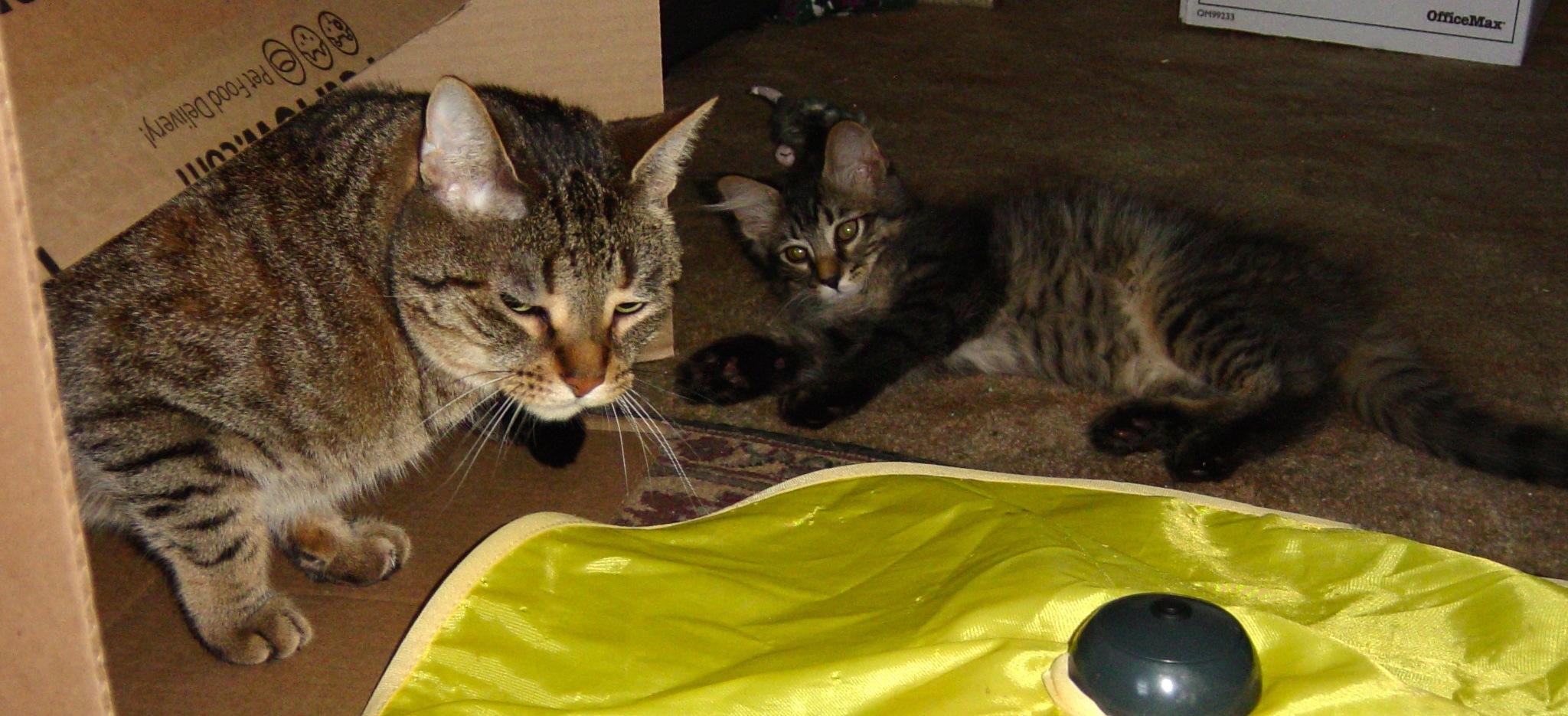Teach Cat Litter Box