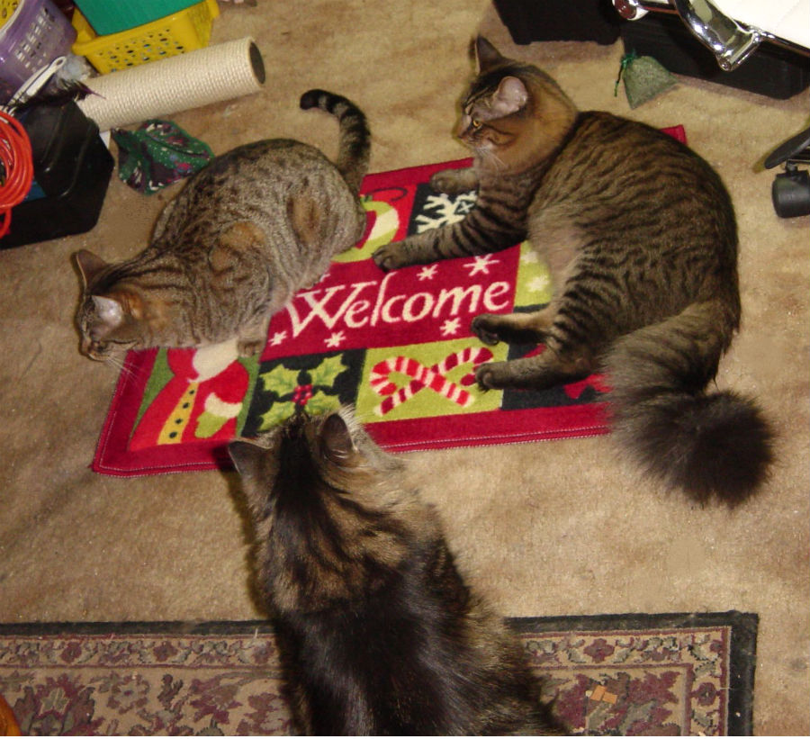 Holiday Rug Makes The Cats' Holiday