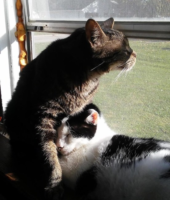 Cats Petting Affection