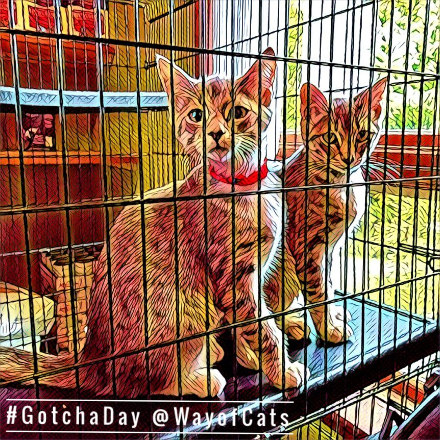 image of two tabby leopard-spotted kittens, one with red collar and one with green, sitting on the tray of their big wire cage and looking at the camera filtered with a bold art filter