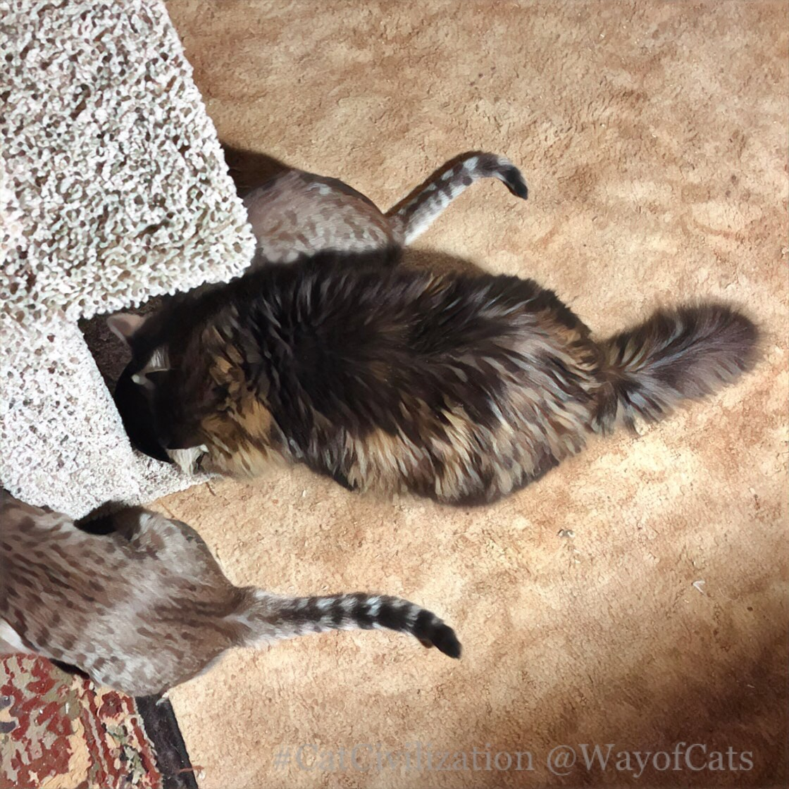 What Are The Cat Growth Stages The Way Of Cats